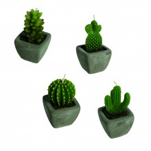 Kaktuskynttilä