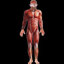 Anatominen Mies Naamiaisasu