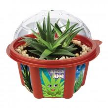 Viljele Oma Aloe Vera -kasvisi
