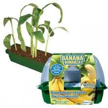 Kasvata Omat Banaanisi