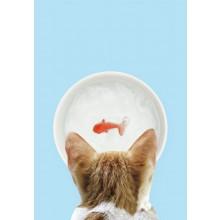 Kissan Vesikuppi Kultakalalla